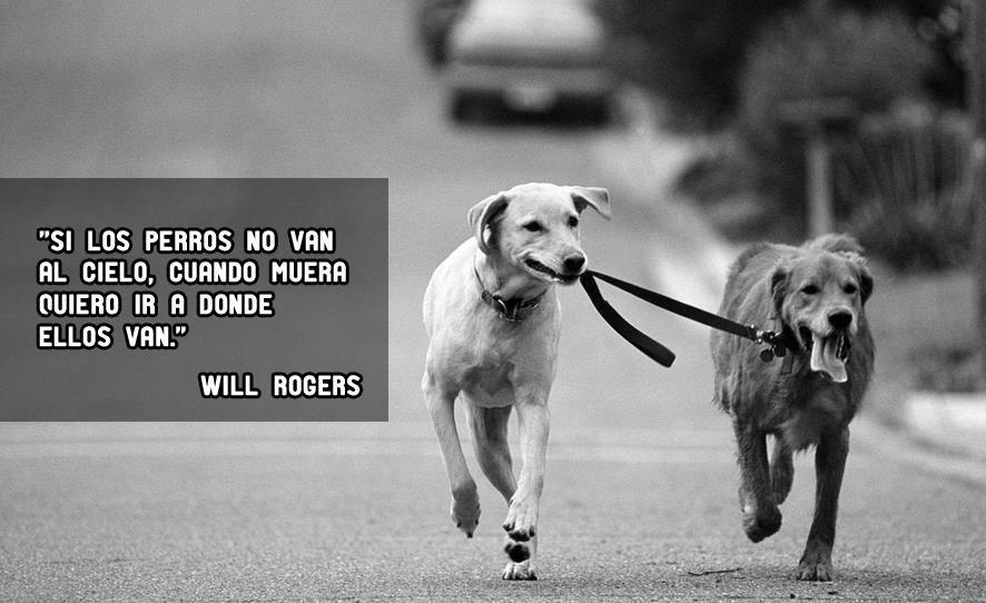 Amo a los Perros!