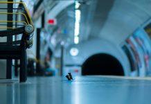 WPY Dos ratones se pelean en el metro
